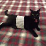 PET-NET Cat Abdomen