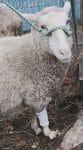 PET-NET Sheep Leg