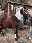 PET-NET Horse - Neck and Leg
