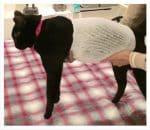 PET-NET Cat - Body