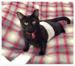 PET-NET Cat - Abdomen