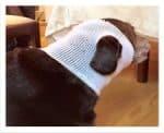 PET-NET Dog - Head