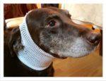 PET-NET Dog - Head over Ears