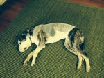PET-NET Dog Body
