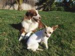 PET-NET Dogs - Leg and Body