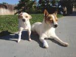 PET-NET Dogs Legs