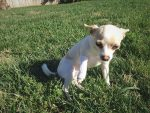 PET-NET Dog Small Leg