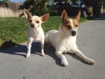 PET-NET Small/Medium Dogs Legs/Paws
