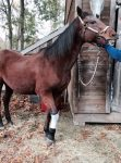 PET-NET Horse - Leg