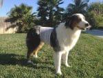 PET-NET Dog Abdomen