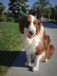 PET-NET Dog Paw